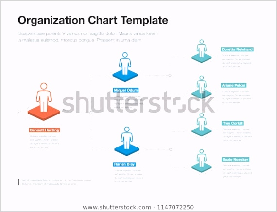 simple pany organization hierarchy chart 600w